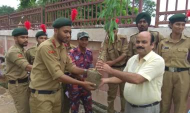 Tree Plantation Programme by NCC Cadets @ HCST