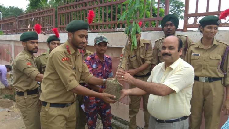 Tree Plantation Programme by NCC Cadets